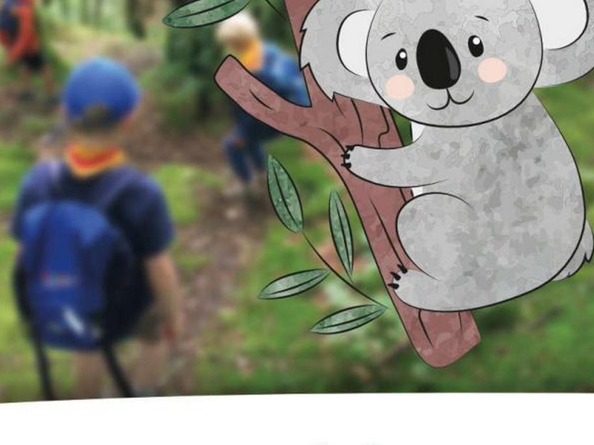 Koalas am Schulzentrum Marienhöhe